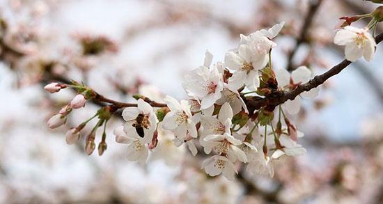 متن عاشقانه شکوفه های بهاری ، متن ادبی درباره سرسبزی بهار
