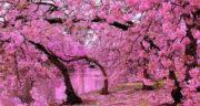 اشعار سعدی برای بهار ، یک بیت شعر در مورد بهار از سعدی + شعر سعدی بهاری