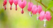 پیامک در مورد فصل بهار ، متن درباره سرسبزی بهار و شکوفه های بهاری