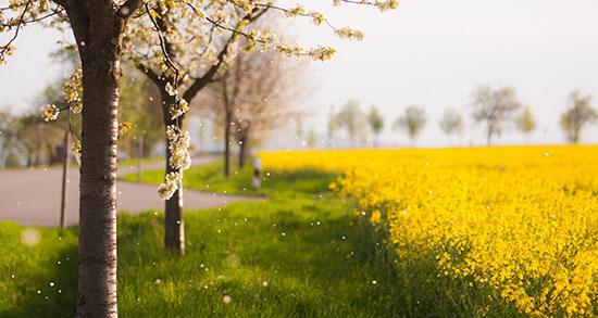 جملات عاشقانه فصل بهار ، جملات کوتاه در مورد فصل بهار + متن بلند درباره بهار