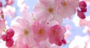شعر بهار از فروغ فرخزاد ، متن و شعر در مورد بهار از فروغ فرخزاد