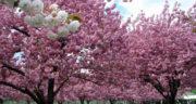 شعر بهار از حافظ ، شیرازی دوبیتی + شعری درباره بهار از حافظ
