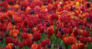 شعر بهار از مولانا ، شعری در وصف بهار از مولانا + بهار از نگاه مولانا