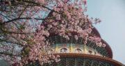 شعر بهار از سعدی ، شیرازی گنجور + شعر دو بیتی در مورد بهار