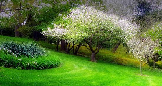 شعر بهار از شاملو ، کوتاه + شعری در وصف بهار خاموش از شاملو
