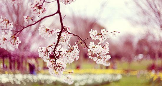 شعر بهار از سهراب سپهری ، شعر راجع به فصل بهار از سهراب سپهری