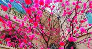 اشعار بهار ، و نوروز از مولانا + شعر دو بیتی در مورد بهار از شاملو و حافظ