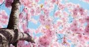 پیامک عاشقانه فصل بهار ، جملات زیبا در مورد نوروز و بهار + بهار زیبای من