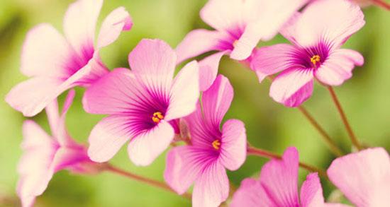 پیامک فصل بهار ، اس ام اس و پیامک های عاشقانه و زیبا در مورد فصل بهار