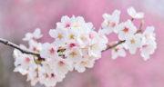 متن فصل بهار ، و عید کودکانه به انگلیسی + جملات کوتاه در مورد فصل بهار