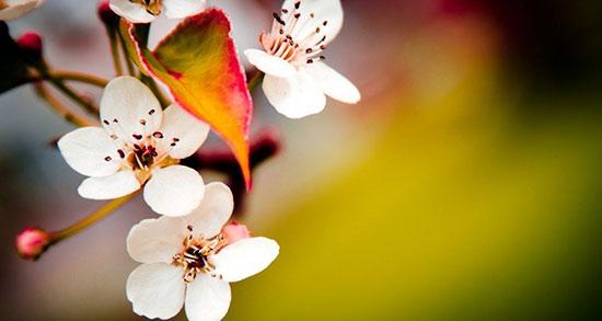 متن بهار برای اینستاگرام ، متن زیبا درباره بهار برای پست اینستا
