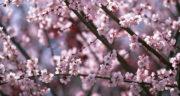 متن فصل بهار به انگلیسی ، توصیف فصل بهار به زبان انگلیسی
