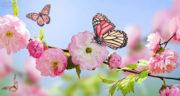 متن در مورد بهار ، و زیبایی های آن و فروردین و شکوفه + بهار نزدیک است