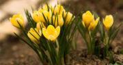 متن در مورد بهار و فروردین ، متن ادبی کوتاه و زیبا عاشقانه در مورد بهار