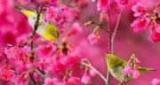 متن درباره فصل بهار و شکوفه ، جملات کوتاه در مورد فصل بهار و شکوفه درختان