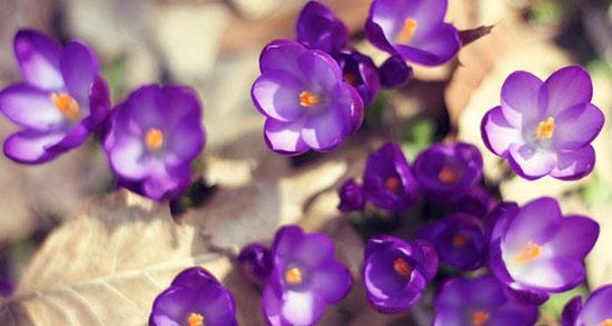متن در مورد بهار و زیبایی های آن ، متن کوتاه در مورد شکوفه های بهاری درختان