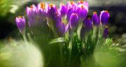 متن در مورد بهار و زندگی ، متن بلند و جملات زیبا در مورد فصل بهار
