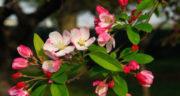 متن در مورد شکوفه های بهار ، متن عاشقانه ادبی و کوتاه در مورد شکوفه های بهاری