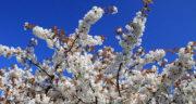 متن در مورد فصل بهار به زبان انگلیسی ، با ترجمه + متن زیبا انگلیسی درباره بهار