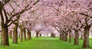 متن در مورد فصل بهار برای کودکان ، متن کودکانه در مورد فصل بهار