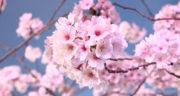 متن درباره سرسبزی بهار ، متن بلند و کوتاه ادبی درباره بهار و شکوفه های بهاری