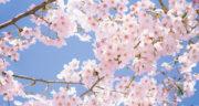 متن درباره بهار به انگلیسی ، متن کوتاه درباره عید نوروز به انگلیسی