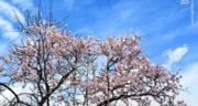 متن درباره بهار در زمستان ، متن زیبا و کوتاه در وصف فصل بهار و نوروز