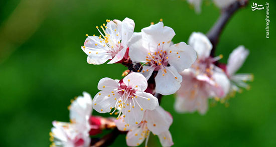 متن درباره بهار در راه است ، متن عادی درمورد بهار + متن ادبی درباره بهار