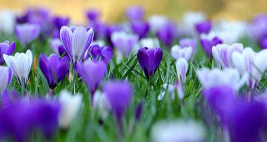 متن درباره فرا رسیدن بهار ، شعر زیبا در مورد فرا رسیدن فصل بهار