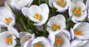 متن برای فصل بهار ، شعر زیبا برای فصل بهار کوتاه و عاشقانه