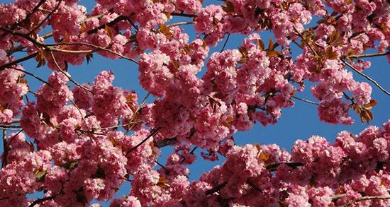 متن از فصل بهار ، متن فصل بهار زیبا + متن کوتاه عاشقانه بهاری