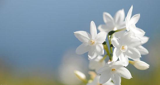 متن برای شروع بهار ، متن زیبا برای آغاز بهار + متن کوتاه عاشقانه بهاری