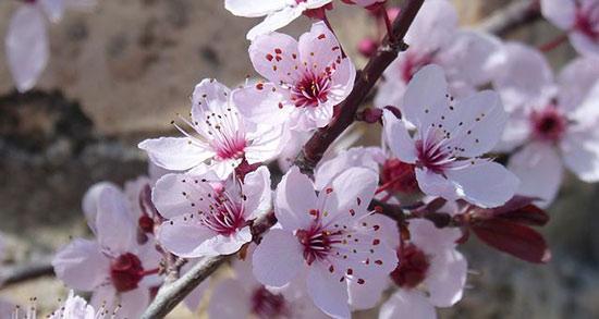 متن نوشته شکوفه های بهاری ، متن کوتاه عاشقانه بهاری و فصل بهار