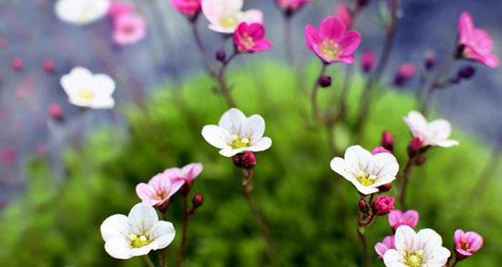 بهترین اشعار بهار ، بهترین اشعار در وصف فصل بهار + شعر دو بیتی در مورد بهار