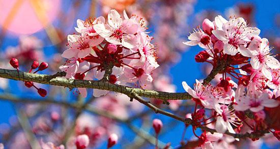 متن درباره بوی بهار ، نارنج + متن بلند و زیبا در مورد بهار و نوروز