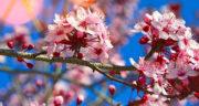 متن بهار نزدیک است ، متن کوتاه عاشقانه بهاری درباره سرسبزی بهار