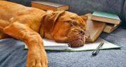 شعر عطار در مورد سگ ؛ اشعار زیبای شاعران بزرگ در مورد سگ ها